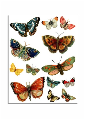 Free butterflies vintage download print